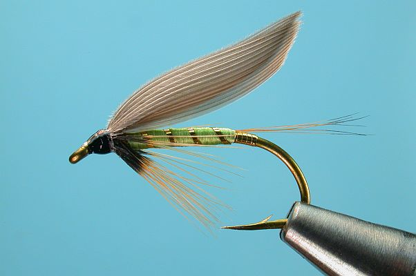 Wing Gold >> Greenwell's Glory Wet Fly